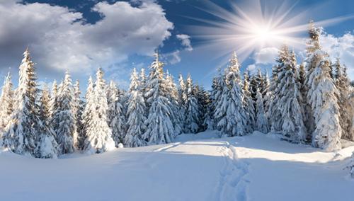 winter-forest-snow-path-forest-sun-clouds.jpg